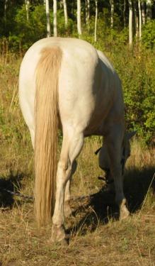 Clinton Anderson Horse Training