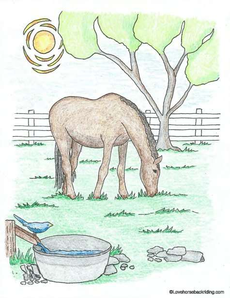 printable horse coloring pages - Horse Color Pages Printable Pages