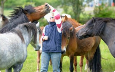 becoming a horse traine