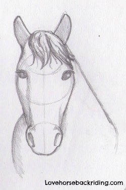 Draw A Horse Head The Final Steps