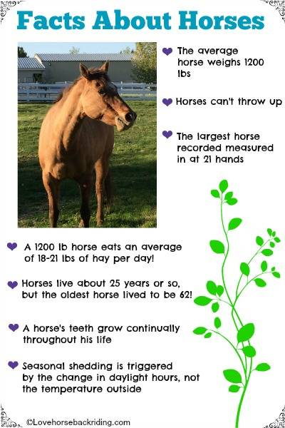 Fun facts about horses such as how much hay they eat and their average weight