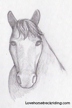 Create A Horse Head Drawing Easy To Follow Instructions