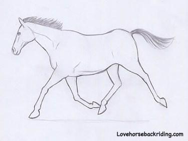 Colour Shaymin Fanart as well Unicorn Pony Horn Item likewise Tortoise Dot To Dot further Ballerina Silhouette together with Kawaii Halloween. on cartoon unicorn
