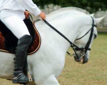 Horse helmets
