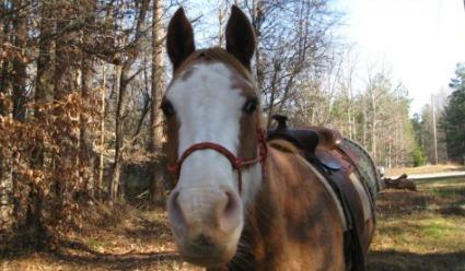 horseback riding books