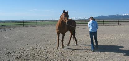 horse training school