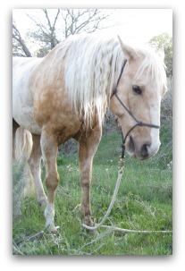 horse training videos