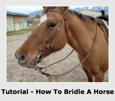 How to bridle a horse step by step instructions for Where can i go horseback riding near me