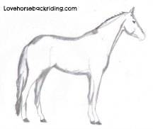 How to Draw a Horse - Step by Step Instructions