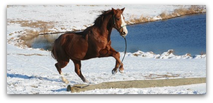 horse training information