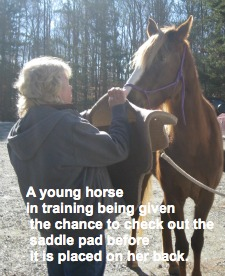 how to train a young horse
