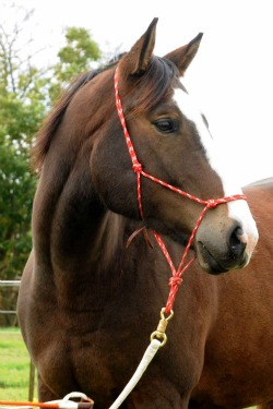 natural horsemanship halters