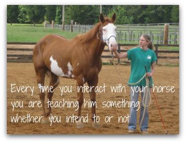 horse riding training