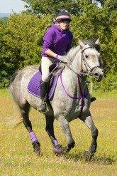 career horse training