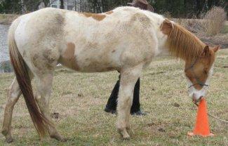 clicker training for horses