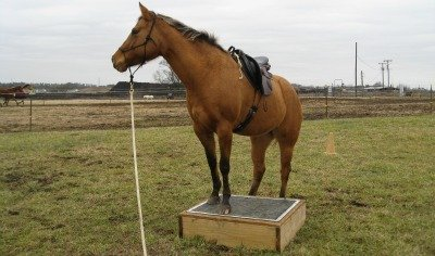ground training a horse