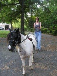 horse ground work