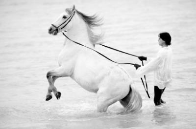horse training career