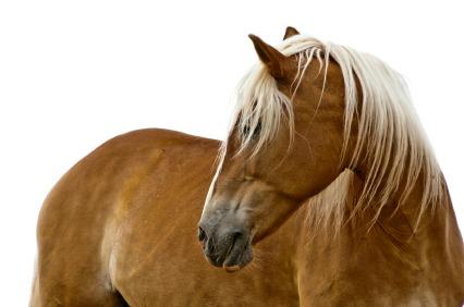 horsetrainingdvds