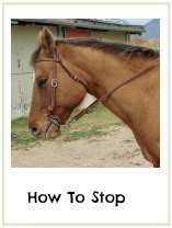 horse riding for beginners what
