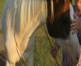 Become a Horse Trainer
