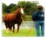 How To Train Horses