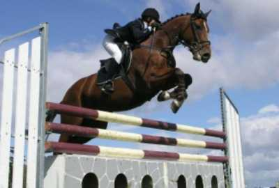 professional horseback riding